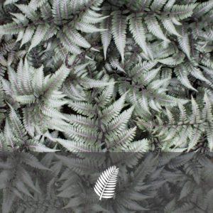 """Athyrium nipponicum pictum """"Godzilla"""""""
